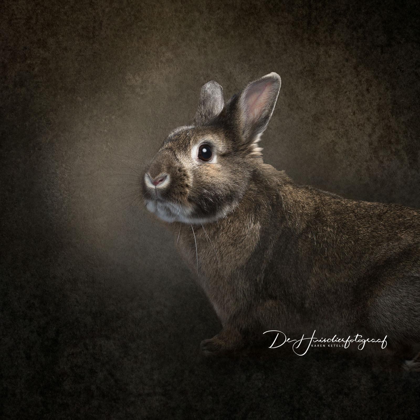 Fine-art-portret van een bruin konijn op bruine achtergrond door De Huisdierfotograaf Karen Ketels