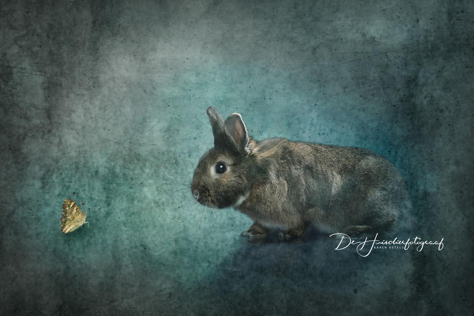 Fine-art-portret van een konijn dat naar een een vlindertje staart. Portret door De Huisdierfotograaf Karen Ketels