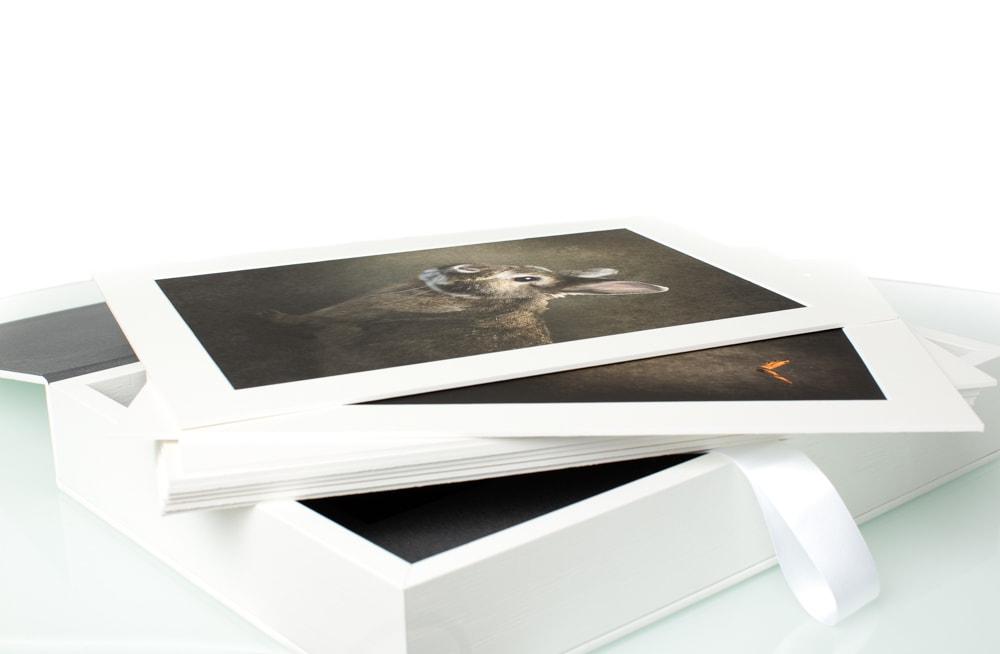 Zicht op de opgekleefde en met passepartout-afgewerkte fine-altbeelden in de koesterbox; de meest luxueuze afwerking voor uw beelden van De Huisdierfotograaf.