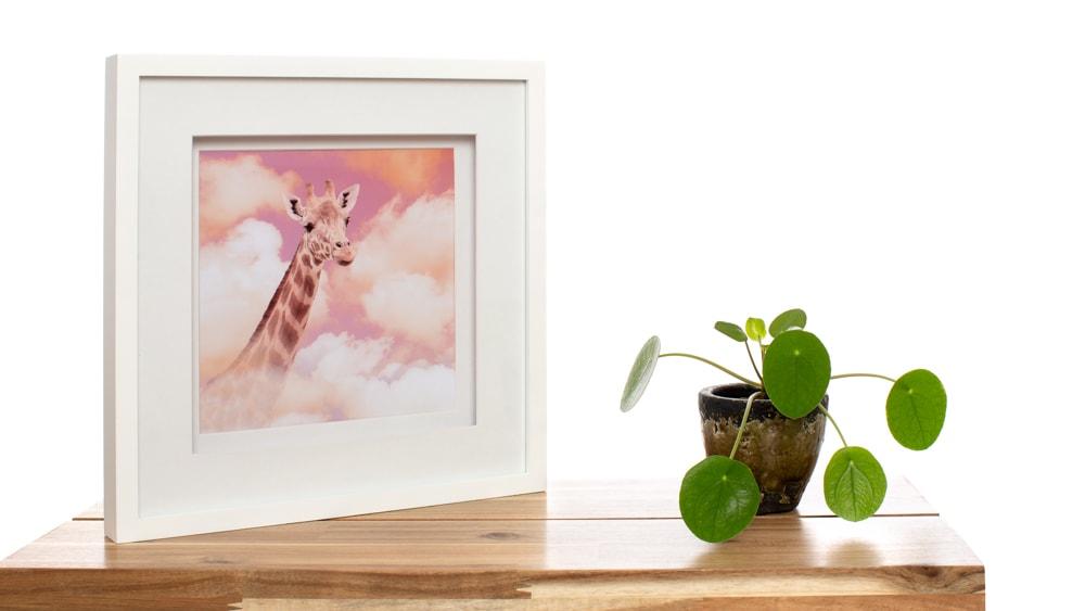 Afwerkingen bij De Huisdierfotograaf; ingekaderde droomfoto van een giraf door De Huisdierfotograaf