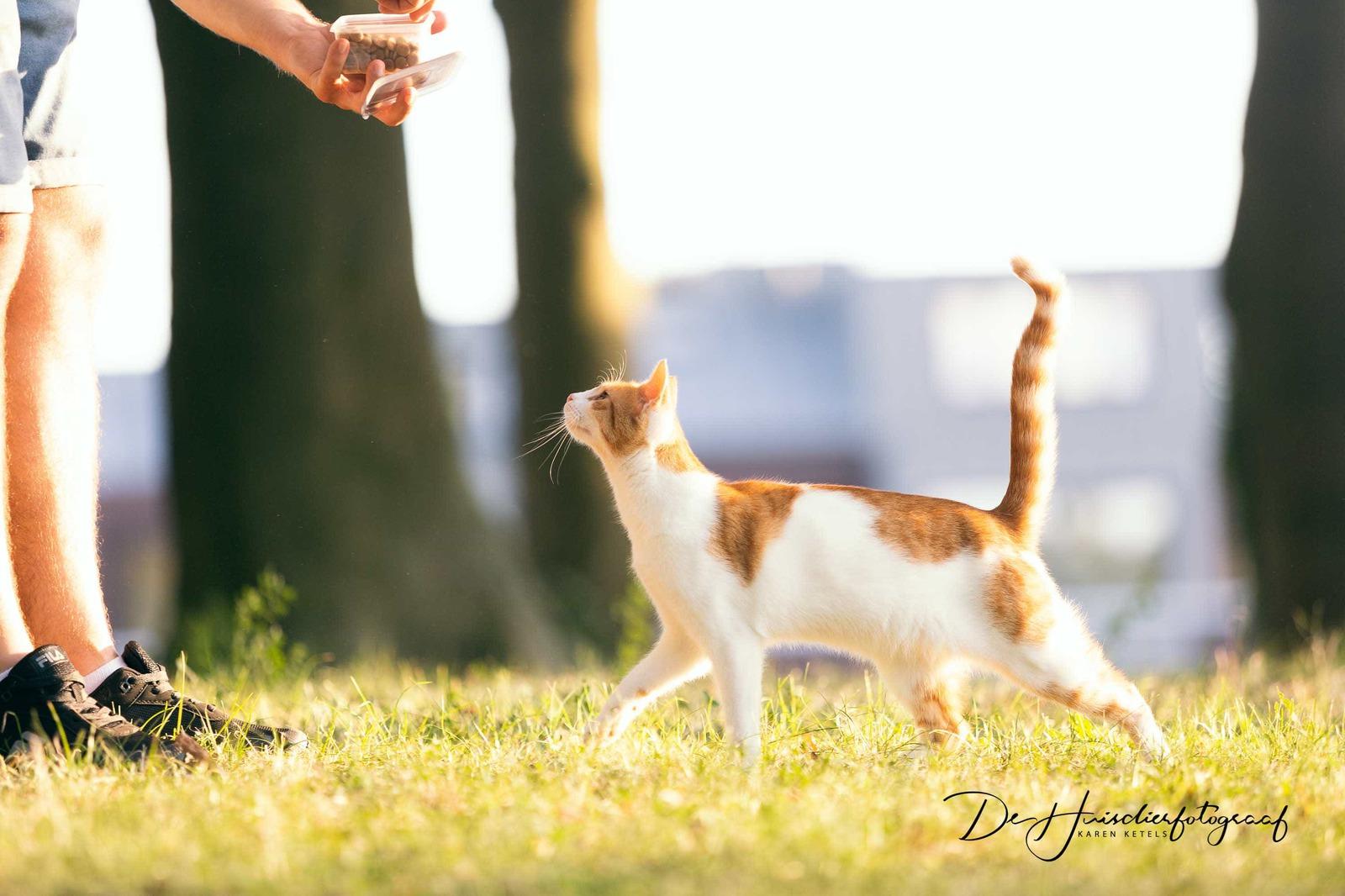 Kat komt koekjes schooien bij haar baasje. Portret door De Huisdierfotograaf