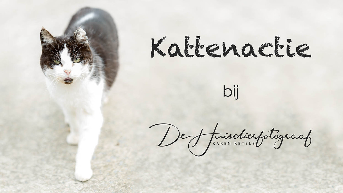 Kattenactie bij De Huisdierfotograaf