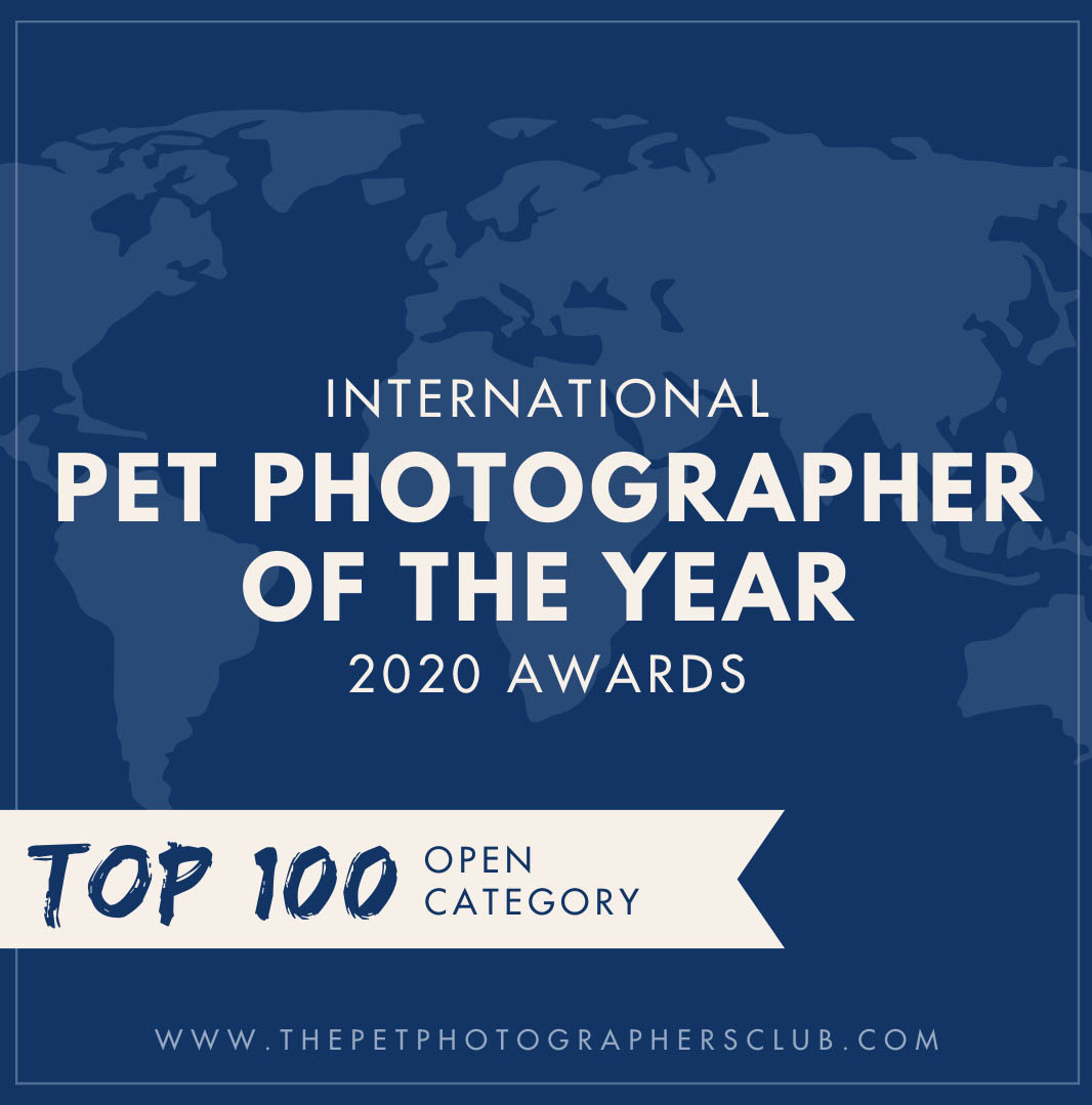 Pet Photographer of the Year 2020 top 100 Open categorie