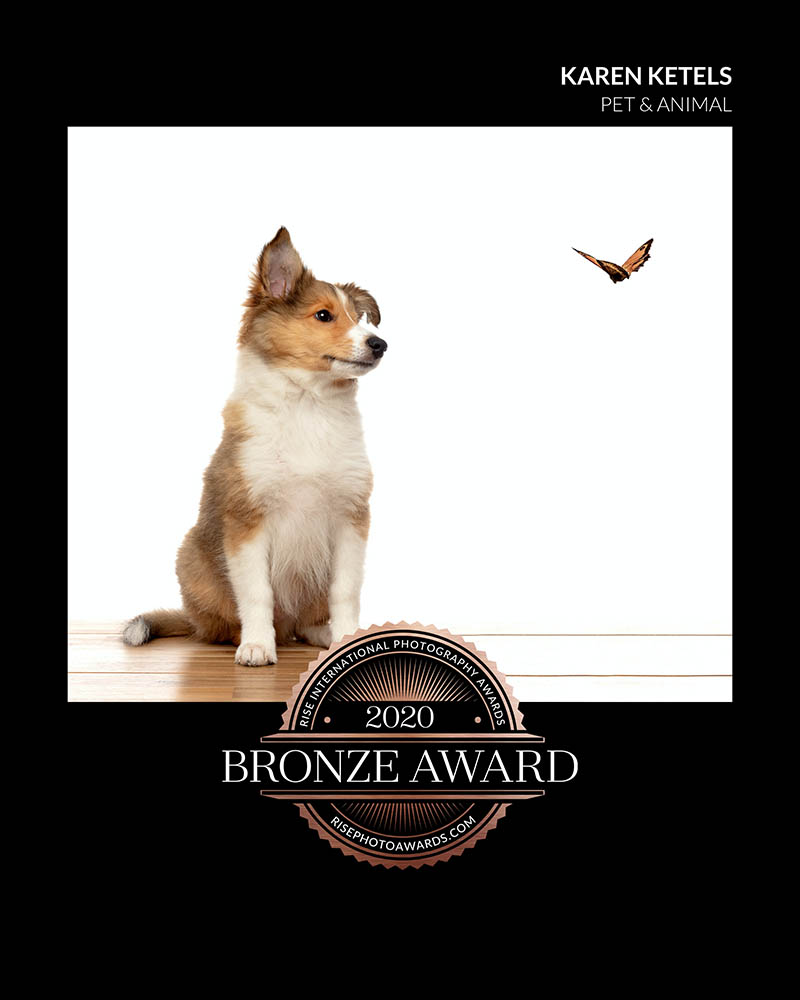 Bronze Award Karen Ketels Pet Photography Rise Awards