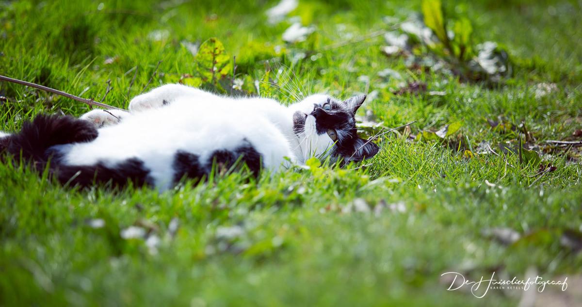 Loensende kat in de tuin door De Huisdierfotograaf