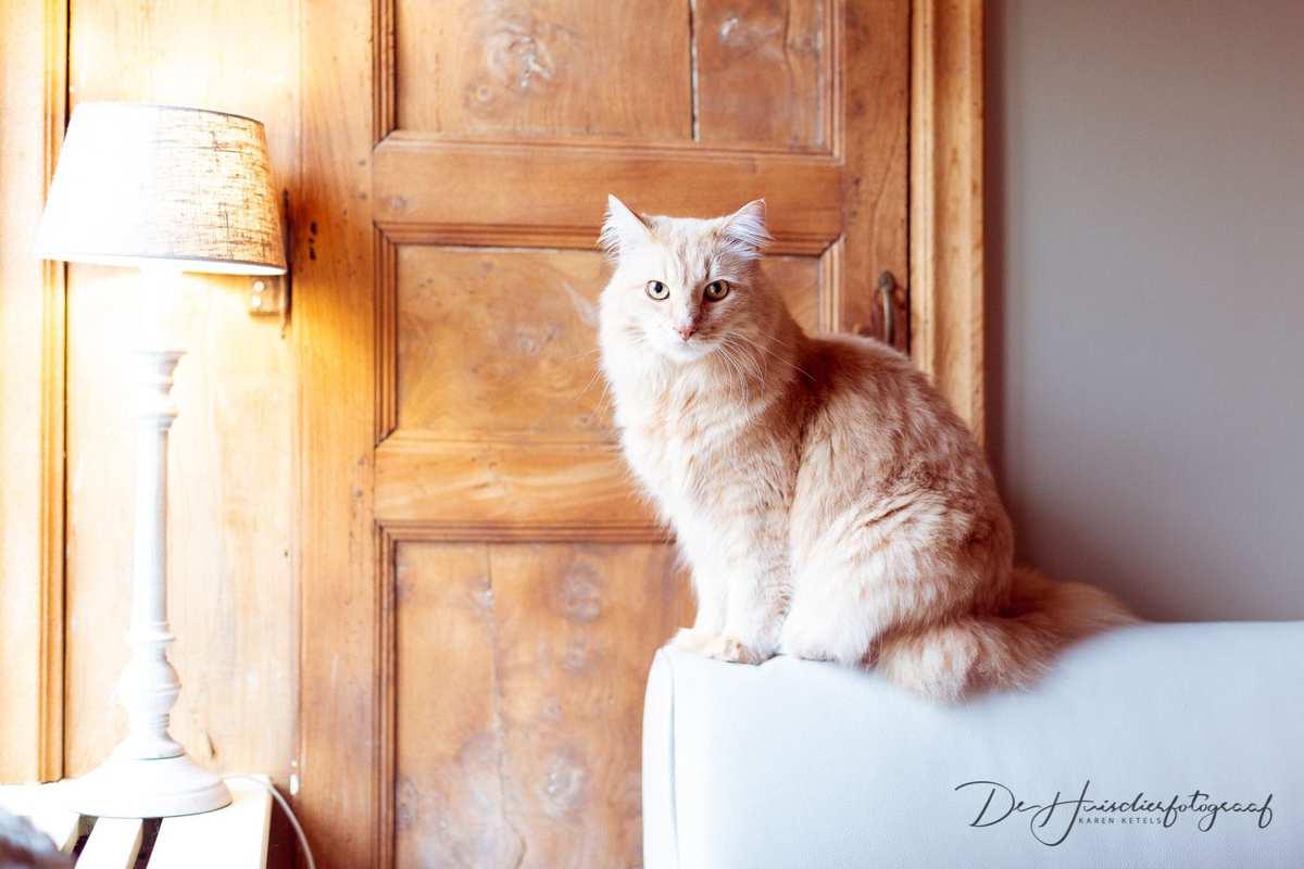 Kattenportret aan huis door De Huisdierfotograaf