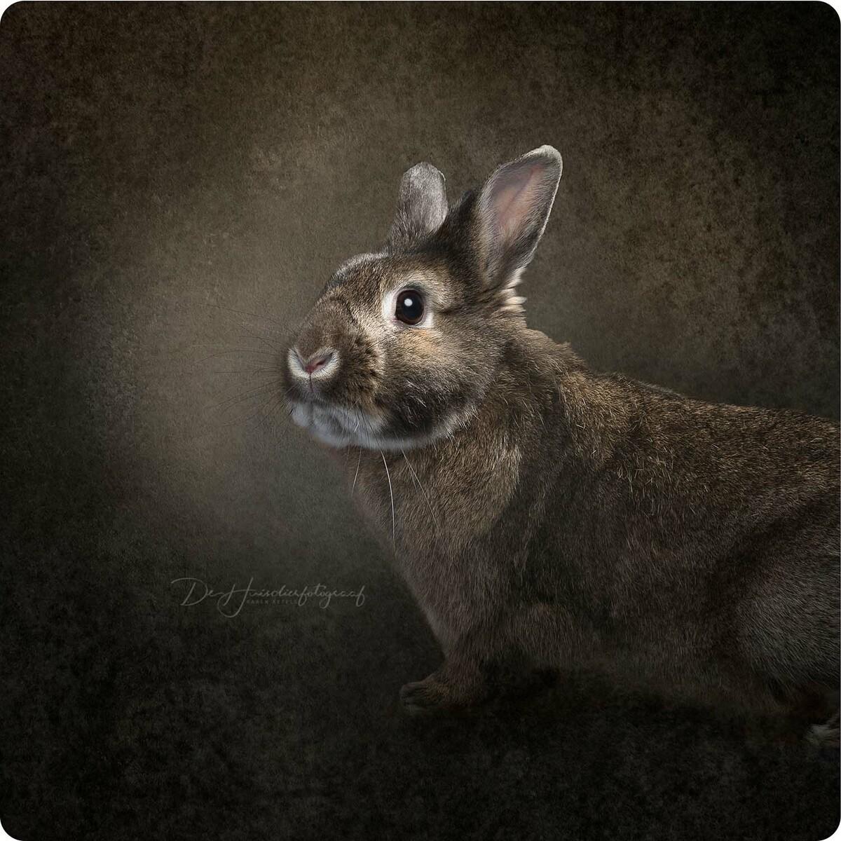 Fine art portret van een konijntje door De Huisdierfotograaf