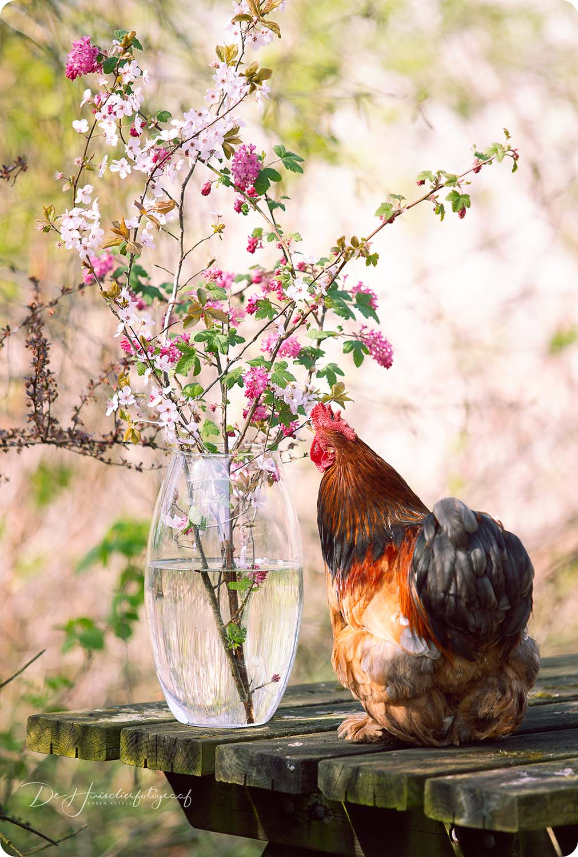 Portret op locatie haan met bloemetjes door De Huisdierfotograaf