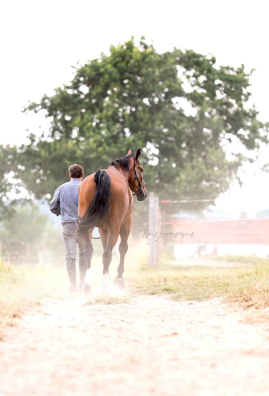 Portret van paard met ruiter op locatie door De Huisdierfotograaf