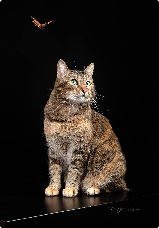 Studioportret van een kat door De Huisdierfotograaf