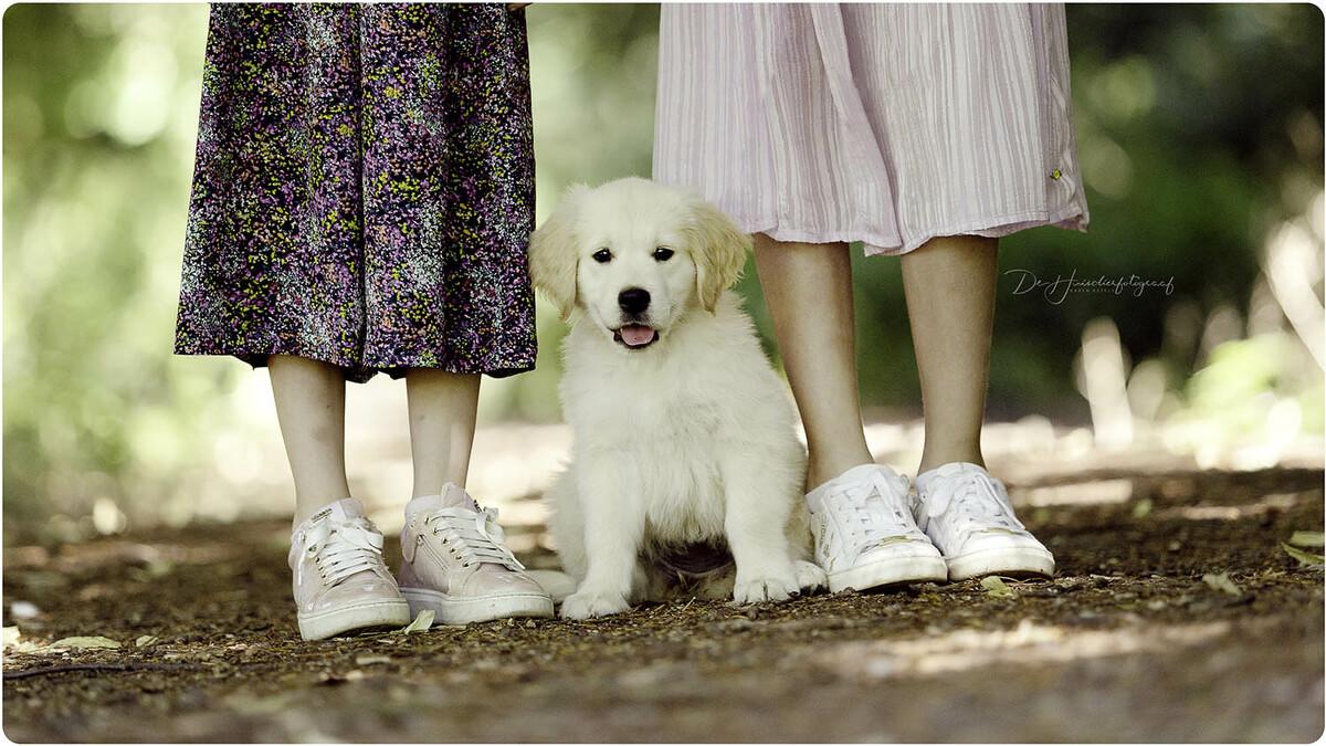 Portret van een vrolijke golden retriever puppy met haar mensenfamilie door De Huisdierfotograaf