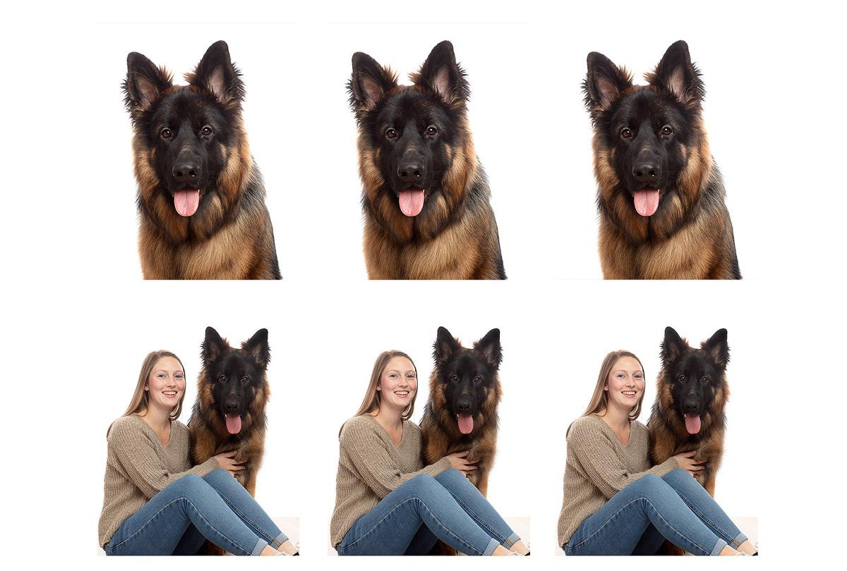 Pasfoto's hond door De Huisdierfotograaf
